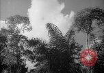 Image of forest Caracas Venezuela, 1940, second 61 stock footage video 65675050630