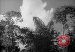 Image of forest Caracas Venezuela, 1940, second 62 stock footage video 65675050630