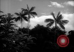 Image of forest Caracas Venezuela, 1940, second 4 stock footage video 65675050633