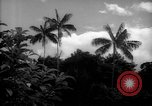 Image of forest Caracas Venezuela, 1940, second 6 stock footage video 65675050633