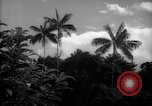 Image of forest Caracas Venezuela, 1940, second 8 stock footage video 65675050633