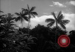 Image of forest Caracas Venezuela, 1940, second 10 stock footage video 65675050633