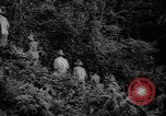 Image of forest Caracas Venezuela, 1940, second 21 stock footage video 65675050633