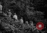 Image of forest Caracas Venezuela, 1940, second 22 stock footage video 65675050633