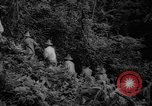 Image of forest Caracas Venezuela, 1940, second 23 stock footage video 65675050633