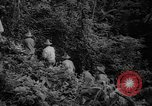 Image of forest Caracas Venezuela, 1940, second 24 stock footage video 65675050633