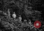 Image of forest Caracas Venezuela, 1940, second 25 stock footage video 65675050633