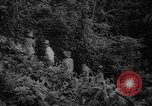 Image of forest Caracas Venezuela, 1940, second 29 stock footage video 65675050633