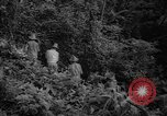 Image of forest Caracas Venezuela, 1940, second 30 stock footage video 65675050633