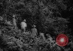 Image of forest Caracas Venezuela, 1940, second 32 stock footage video 65675050633