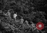Image of forest Caracas Venezuela, 1940, second 34 stock footage video 65675050633