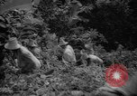 Image of forest Caracas Venezuela, 1940, second 37 stock footage video 65675050633