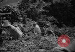 Image of forest Caracas Venezuela, 1940, second 38 stock footage video 65675050633