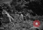 Image of forest Caracas Venezuela, 1940, second 39 stock footage video 65675050633