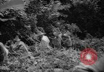 Image of forest Caracas Venezuela, 1940, second 43 stock footage video 65675050633