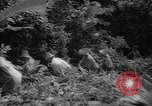 Image of forest Caracas Venezuela, 1940, second 46 stock footage video 65675050633