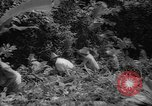 Image of forest Caracas Venezuela, 1940, second 47 stock footage video 65675050633