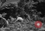 Image of forest Caracas Venezuela, 1940, second 48 stock footage video 65675050633