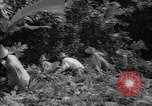 Image of forest Caracas Venezuela, 1940, second 49 stock footage video 65675050633