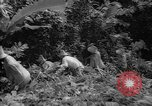 Image of forest Caracas Venezuela, 1940, second 50 stock footage video 65675050633