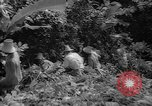 Image of forest Caracas Venezuela, 1940, second 51 stock footage video 65675050633