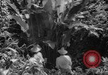 Image of forest Caracas Venezuela, 1940, second 54 stock footage video 65675050633