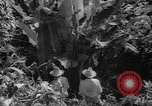 Image of forest Caracas Venezuela, 1940, second 55 stock footage video 65675050633