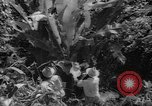 Image of forest Caracas Venezuela, 1940, second 56 stock footage video 65675050633