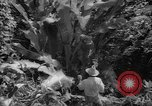 Image of forest Caracas Venezuela, 1940, second 57 stock footage video 65675050633