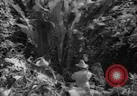 Image of forest Caracas Venezuela, 1940, second 59 stock footage video 65675050633