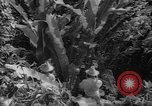 Image of forest Caracas Venezuela, 1940, second 60 stock footage video 65675050633