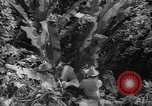 Image of forest Caracas Venezuela, 1940, second 61 stock footage video 65675050633
