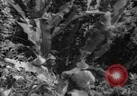 Image of forest Caracas Venezuela, 1940, second 62 stock footage video 65675050633
