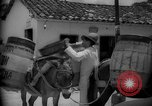 Image of Mules for transportation Caracas Venezuela, 1940, second 60 stock footage video 65675050640