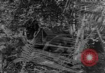 Image of camouflaging techniques Italy, 1945, second 25 stock footage video 65675050680