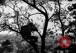 Image of camouflage United States USA, 1942, second 4 stock footage video 65675050740