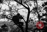 Image of camouflage United States USA, 1942, second 5 stock footage video 65675050740