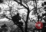 Image of camouflage United States USA, 1942, second 14 stock footage video 65675050740