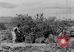Image of camouflage United States USA, 1942, second 15 stock footage video 65675050742