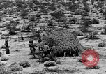 Image of camouflage United States USA, 1942, second 34 stock footage video 65675050742
