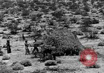 Image of camouflage United States USA, 1942, second 35 stock footage video 65675050742