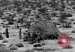 Image of camouflage United States USA, 1942, second 36 stock footage video 65675050742