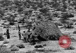 Image of camouflage United States USA, 1942, second 37 stock footage video 65675050742