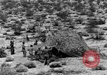 Image of camouflage United States USA, 1942, second 38 stock footage video 65675050742