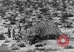 Image of camouflage United States USA, 1942, second 39 stock footage video 65675050742