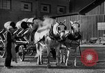 Image of beer brewery opening after prohibition United States USA, 1934, second 36 stock footage video 65675050774