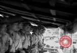 Image of Japanese occupation of Borneo Borneo, 1942, second 19 stock footage video 65675050778