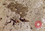 Image of dead bodies Tinian Island Mariana Islands, 1944, second 5 stock footage video 65675050848