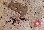 Image of dead bodies Tinian Island Mariana Islands, 1944, second 9 stock footage video 65675050848
