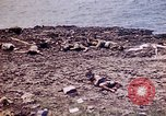 Image of dead bodies Tinian Island Mariana Islands, 1944, second 33 stock footage video 65675050848
